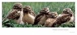 Owl Family - 3 section Panoramic card