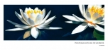 Water Lilies - 3 section Panoramic card