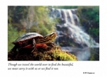 Turtle at Waterfall