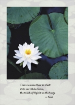 Lotus & Lilies
