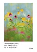 Prairie Cornflowers