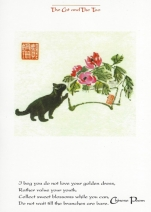 Cat & The Tao